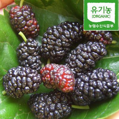 [예약]친환경유기농 단비네 햇오디 특상품 5kg무료배송